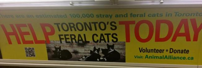 If anyone wants a cat, I brought 5,000 back from Toronto